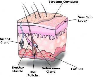 Peeling Skin  Picture