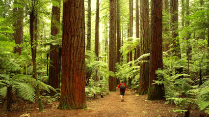 Image result for The Healing Power of Nature Therapy
